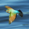 Types Of Birds That Migrate