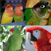Types Of Domestic Birds