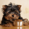 Types Of Food For Dogs