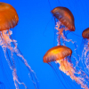Types Of Jellyfish