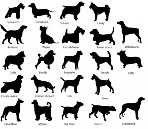 Types Of Dog Breeds Pictures - Breed of Dog