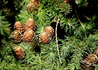 Types Of Evergreen Plants