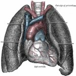 Types Of Lung Disease