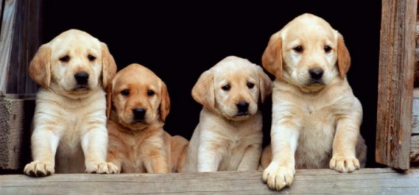 Types Of Puppies