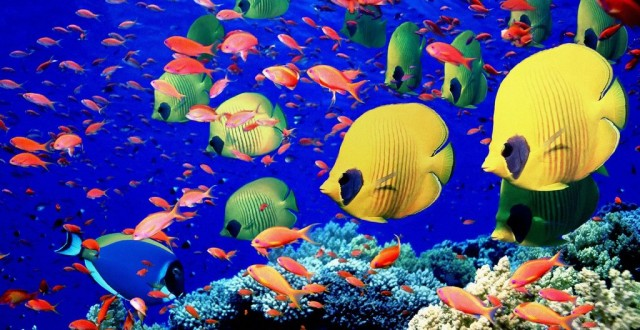 Types of tropical aquarium fish - photo#23