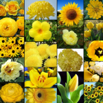 Types of Yellow Flowers