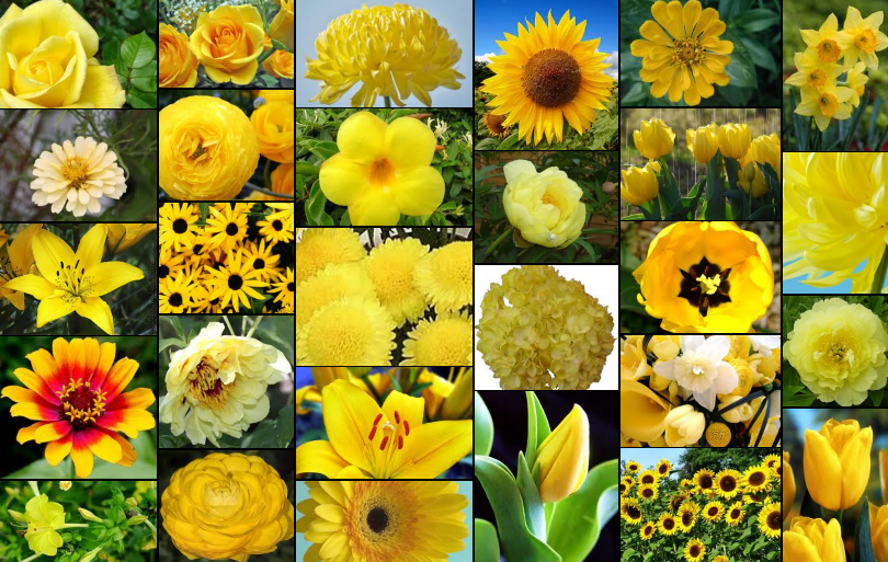 Types of yellow flowers types of types of yellow flowers mightylinksfo