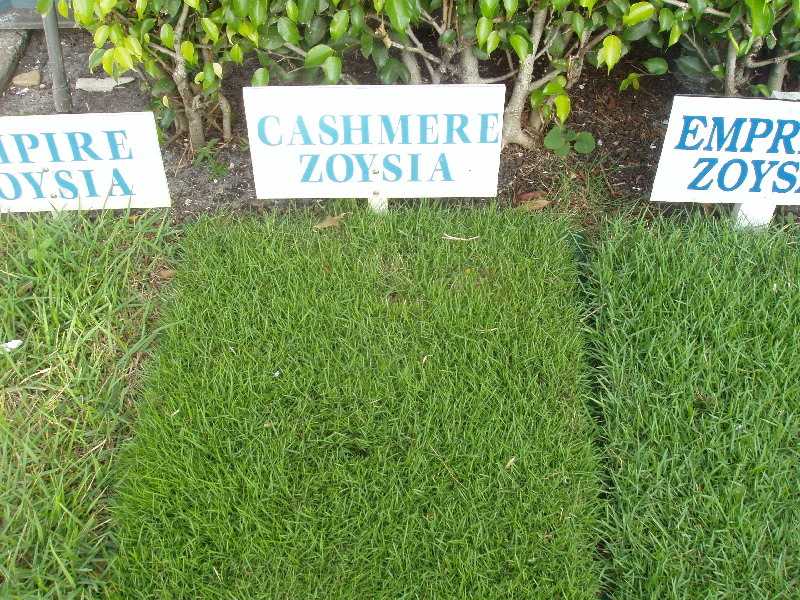 types of zoysia types of