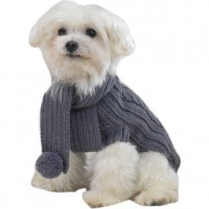 Types Of Dog Coats
