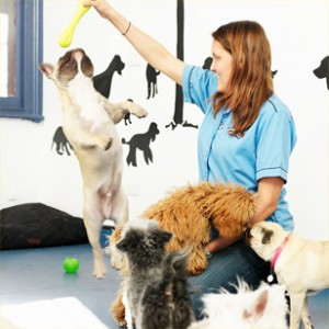 Types Of Dog Grooming