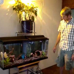 Types Of Fish Aquaponics