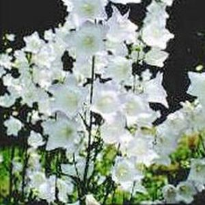 Types Of Plants Perennial
