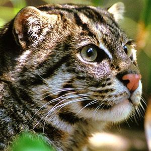 Types Of Animals Found In The Tropical Rainforest Types Of