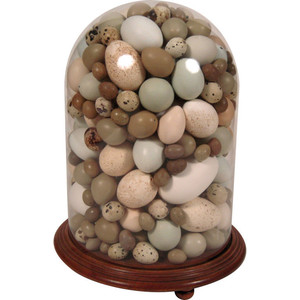 Types Of Birds Eggs
