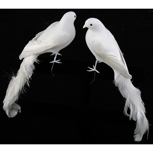 Types Of Birds That Are White