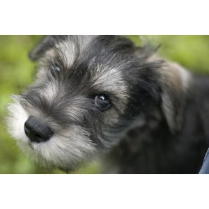 Types Of Cute Dog Breeds