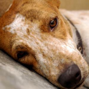 Types Of Dog Diseases