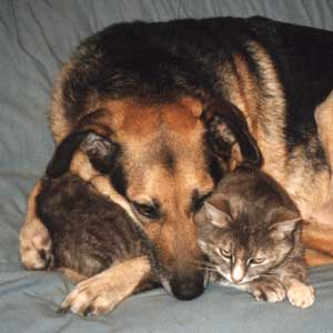 Types Of Dogs And Cats
