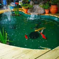 Types of fish pond types of for Varieties of fish in the ponds