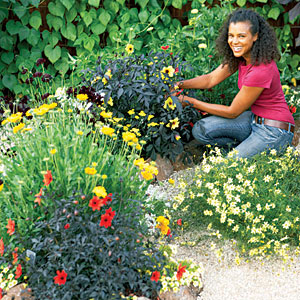 Types Of Flowers For Garden