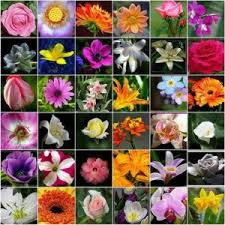 Types Of Flowers Names