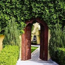 Types Of Plants For Hedges