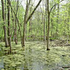Types Of Plants In Wetlands