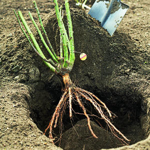 Types Of Plants Roots