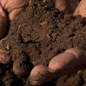 Types Of Soil Of India