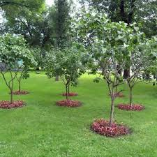 Types Of Trees For Gardens