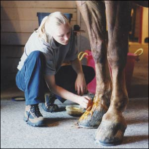 Types Of Veterinary Careers
